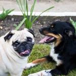 4 Tipps um Ihrem Hund seinen Namen beizubringen