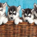 7 Gründe für Hunde dankbar zu sein