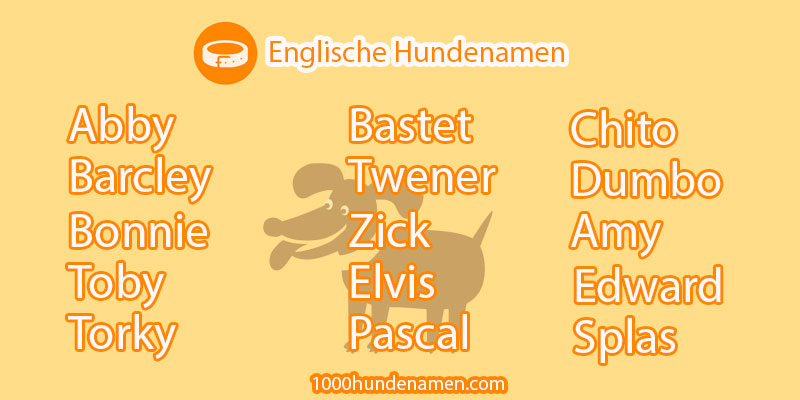 englische hundenamen photo
