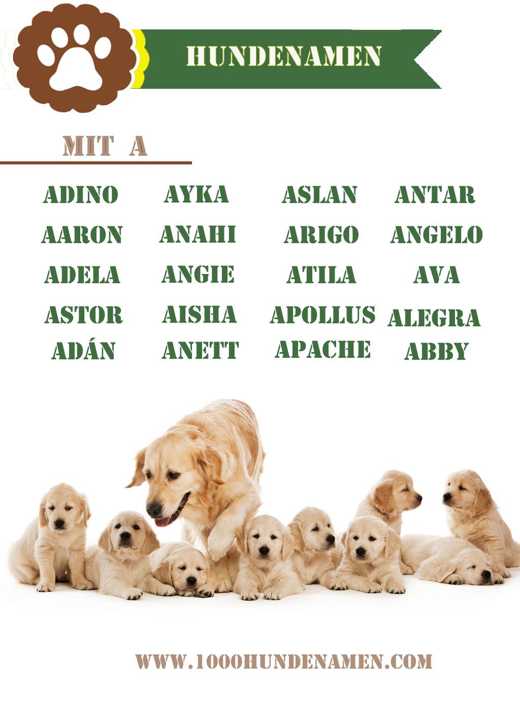 hundenamen mit a