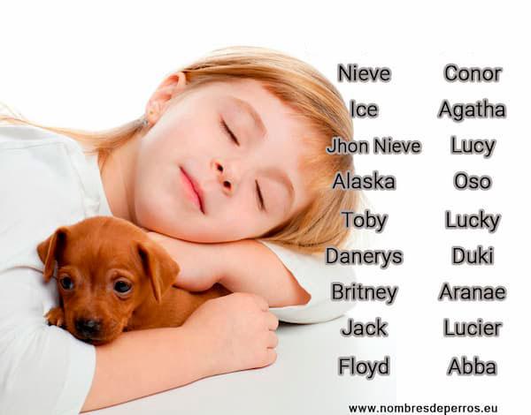 Namen Hunde