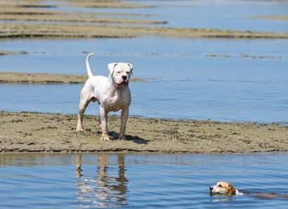 großer weißer Hund