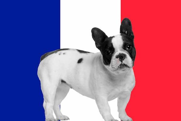 Französische hundenamen