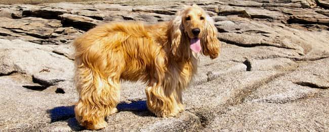 Hund griechischen Inseln