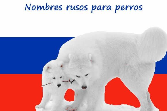 Russische hundenamen