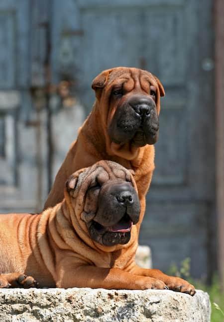 Starke Hundenamen