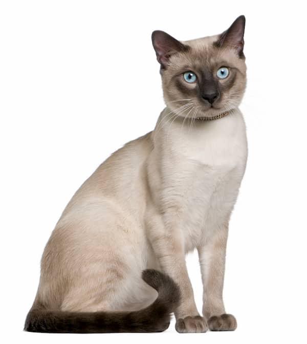 Kurznamen für weibliche und männliche Katzen