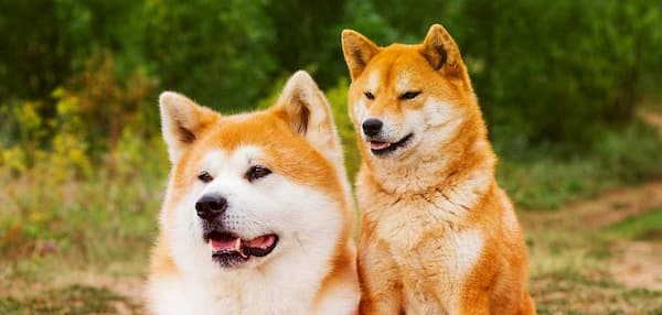 asiatische Namen für Hunde
