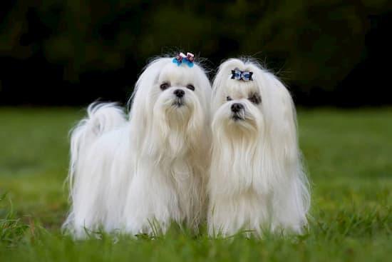 pelzige Hunderassen